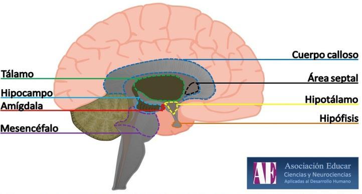 La teoría del Cerebro Triuno : El Enciclopedista