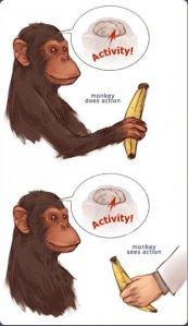 Descubrimiento de las neuronas espejo