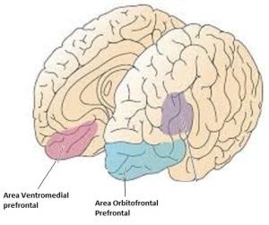 Areas encargadas de identificar y Controlar las Emociones
