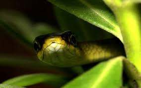 serpiente camuflada